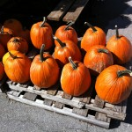 The first thing that caught our eye were the fresh pumpkins. And only $5 each! A great start to the fall season..