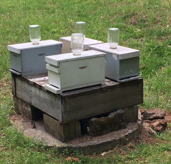 Honey Bee Nukes Southern Beekeeping