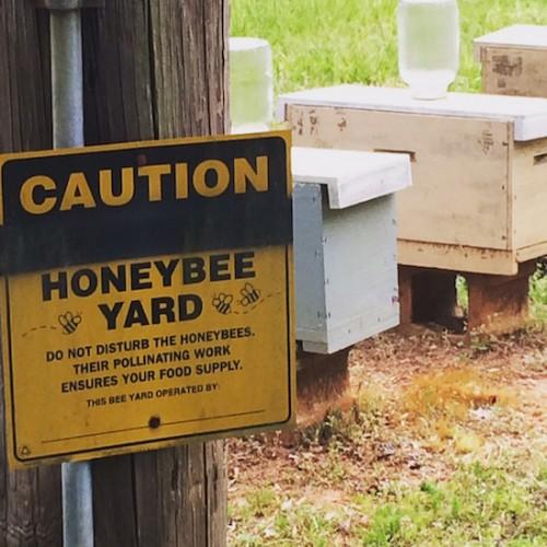 Honeybee Local Honey Beehives