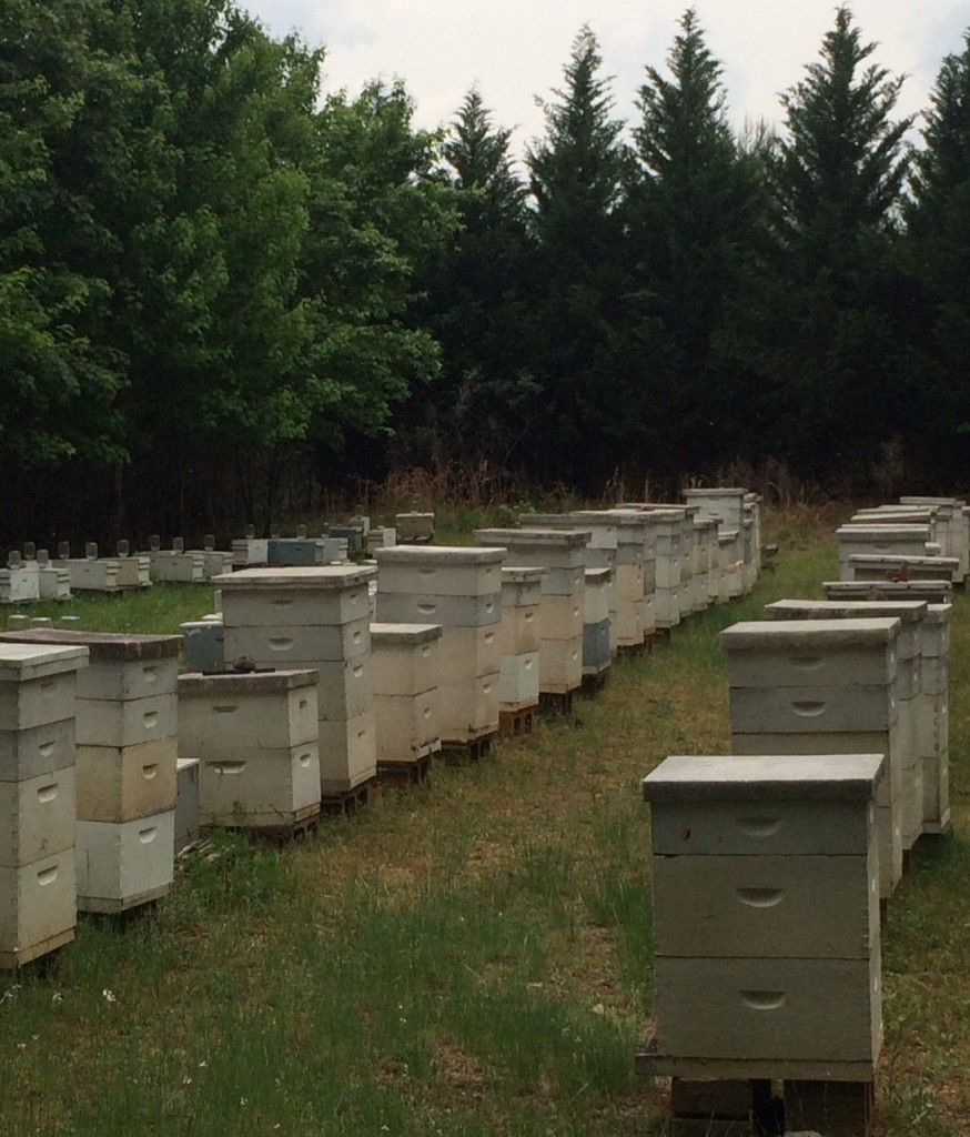 Local Honey Apiary Bee Hives