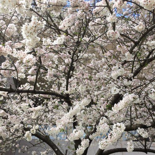 So pretty. So full of pollen.