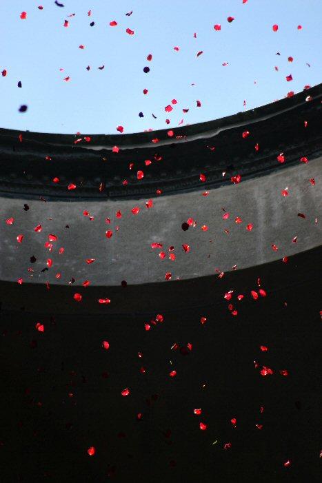 rose petals UGA #RoseBowl #GoDawgs